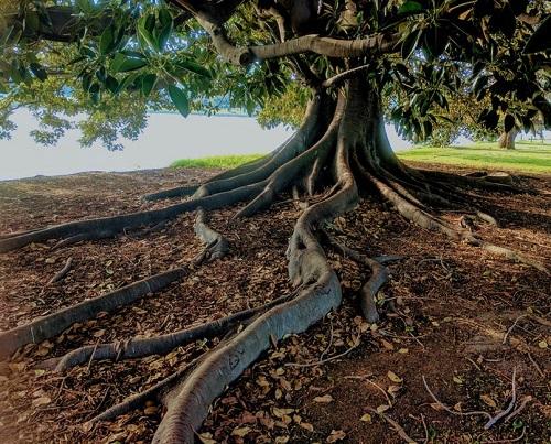 Árbol de la salud